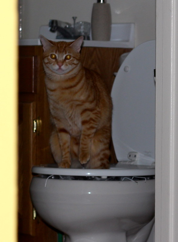 Tigger on the potty
