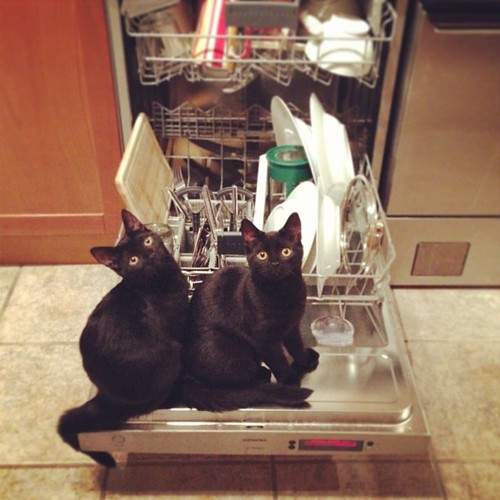 "What do you mean, ""we're not allowed in the dishwasher""?"