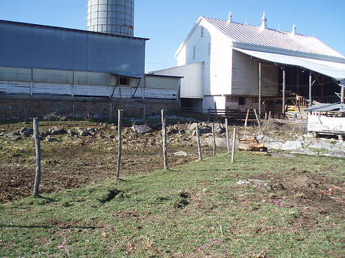 Roof runoff and high concentrations of livestock at the barn and cattle handling area caused soil erosion and bacterial contamination of Smith Creek.
