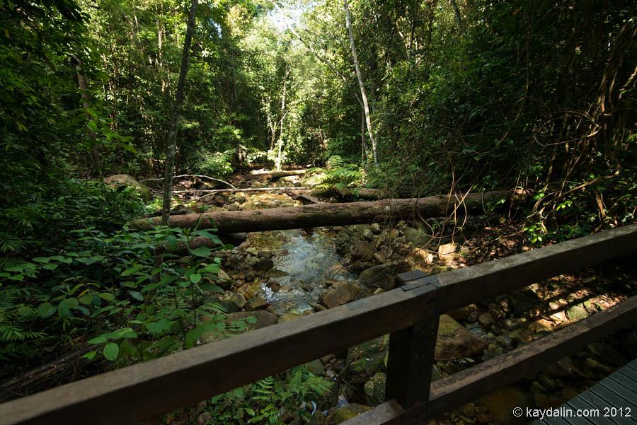 дамай, поход в лес, борнео