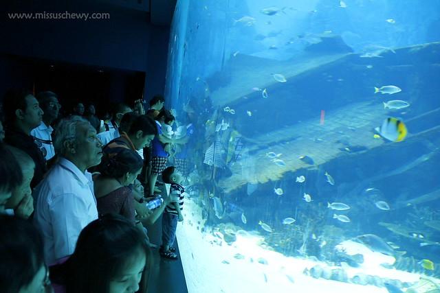 RWS S.E.A Aquarium 407