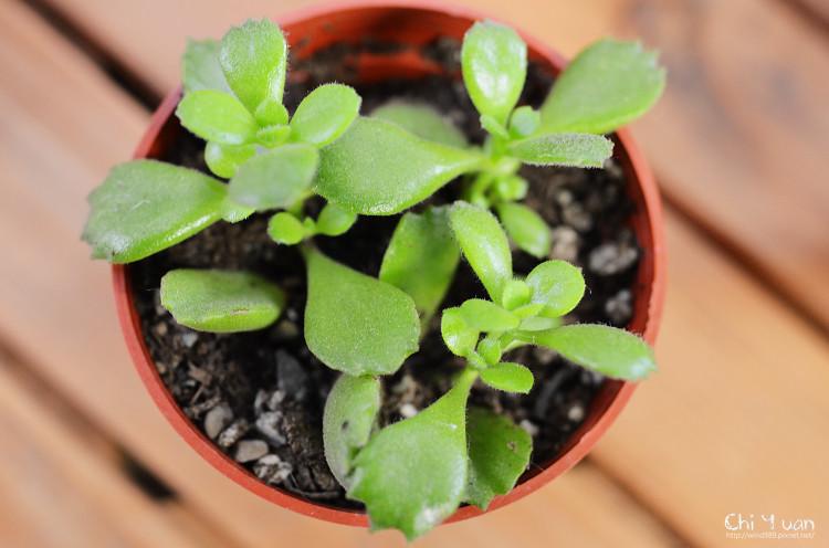 2012多肉植物21.jpg