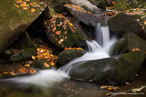autumn fall water leaves creek river nationalpark moss rocks seasons unitedstates tennessee gatlinburg smokies greatsmokymountains greatsmokymountainsnationalpark greatsmokies