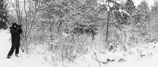 Walnut Woods Panorama 3