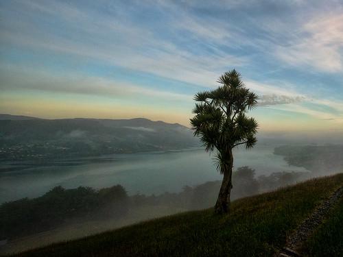 road morning mist tree harbour nz cabbage otago dunedin peninsula highcliffe otao