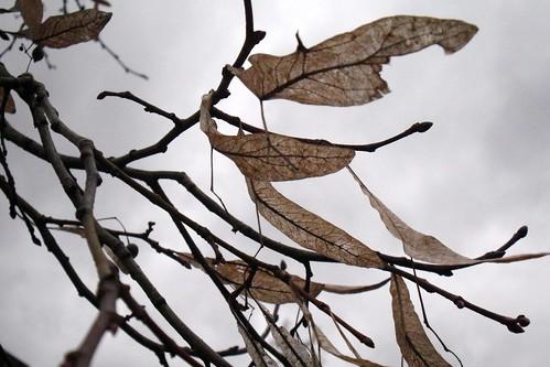 Dry seedleafs