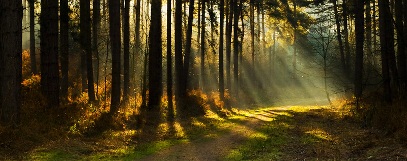 Rays of Light in Sherwood Forest