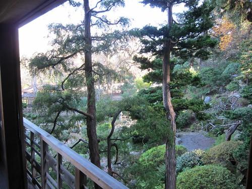 Hakone Japanese Gardens, Saratoga, CA, tree IMG_2380