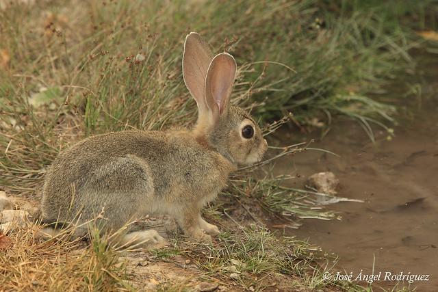 Le como el conejo a mi esposa vicky lozano - 3 5
