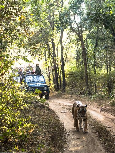 Ranthambore - India