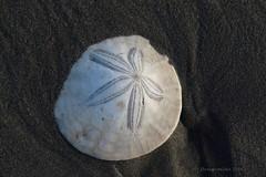 Griffiths-Priday State Park, Copalis Beach Washington, USA