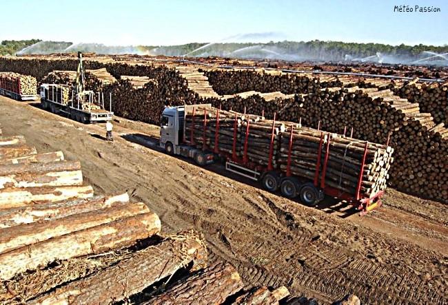 zone de stockage du bois dans les Landes suite à la tempête Klaus météopassion