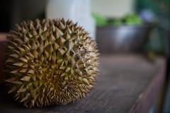 flower(0.0), plant(0.0), produce(0.0), macro photography(1.0), flora(1.0), fruit(1.0), food(1.0), durian(1.0), close-up(1.0),