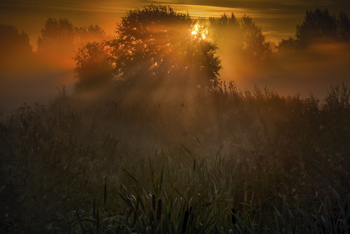 landscape finland southernfinland helsinki sunrays rays sunrise fog mist foggy morning morningfog milamai redsky golden field wildflower grass autumn nature naturallight trees forest sun sunlight light shiningthrough beautiful amazing mistlayers canon6d panorama maisema finnish suomi tyndall scattering beam beams