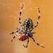 Umm... Ladybird for Dinner