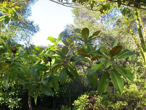 Hakone Japanese Gardens, Saratoga, CA, bamboo IMG_2332