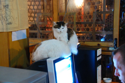 cats on computer