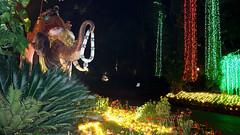 8Christmas in Bhubaneswar