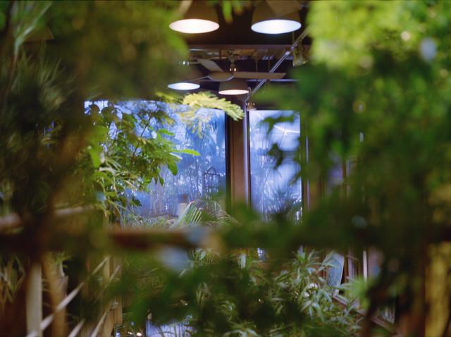 近所の植物屋