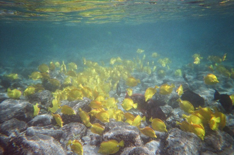Snorkelling at Captain Cook Monument - Kealakekua Bay