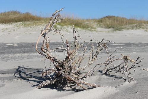 Ocracoke Island driftwood find.