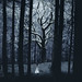 moonlight in the heart of the forest by rosie.prosser