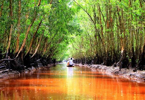 Tra Su Nature Reserve, Vietnam