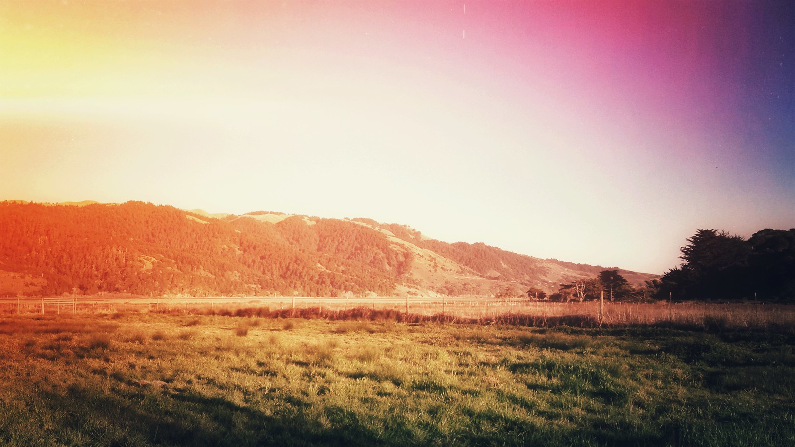Bolinas Meadow