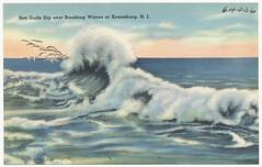 Sea gulls dip over breaking waves at Keansburg, N.J.