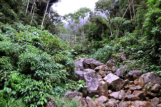 Cloud Forest Stream - Running into the Madre De Dios