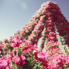 Oh, the beauty of petunias!  ♥♡♥♡