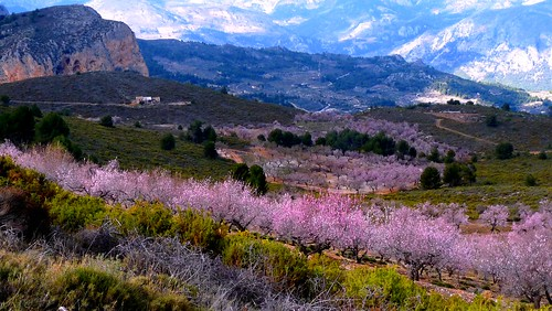 Sierra Aitana Cherry Blossom #dailyshoot #Spain