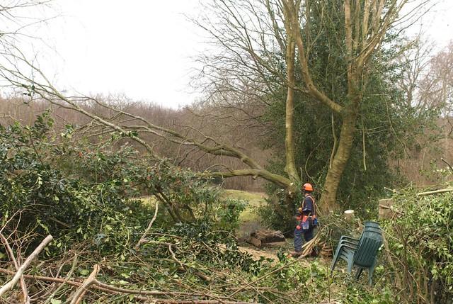 DSC_5728 tree felling