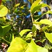 Garden Inventory: Lemon - 08