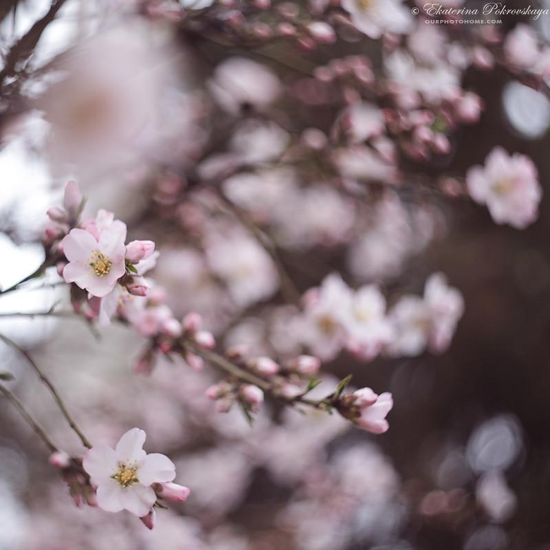 spring_ya_07