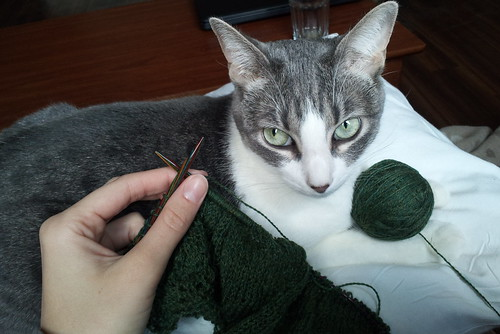 lily knitting_cropped