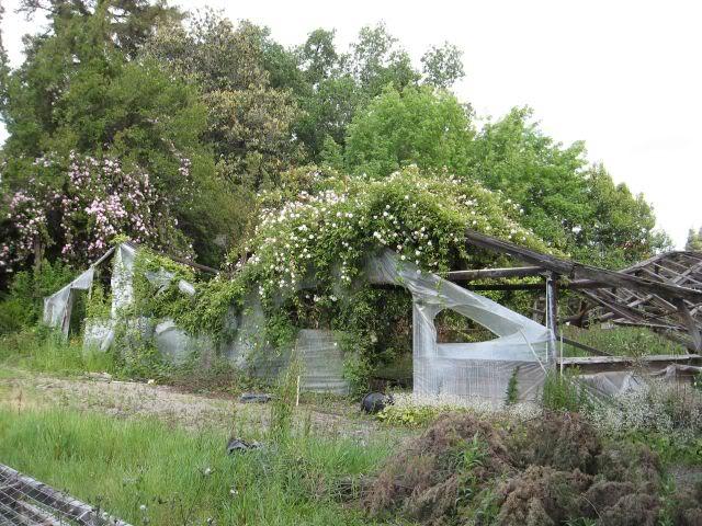 Greenhousescloseup
