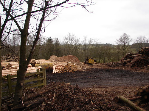The smell of fresh timber.. we're off to Scotland! The lumber yard at Sawley, North Yorks