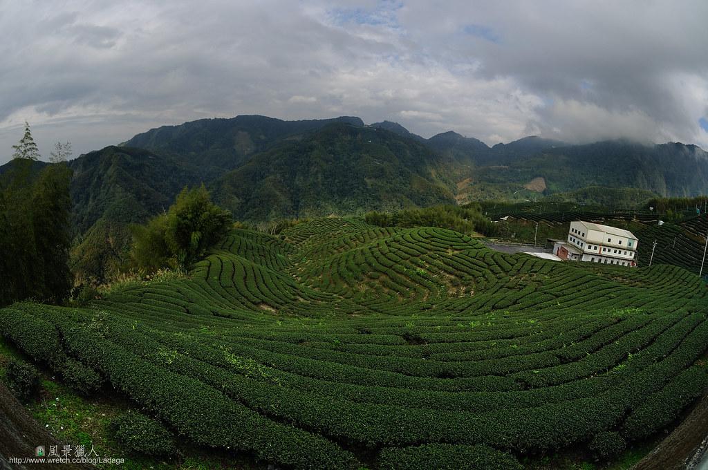 竹山八卦茶園