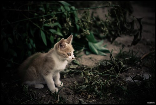 Gato 1 by MarcosCousseau