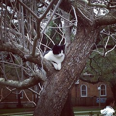 one of the campus cats just chilling in a tree #onlyattulane