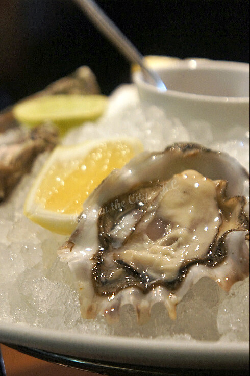 Fresh Pacific Oysters 02