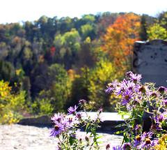 Wildflowers at Cataract Falls