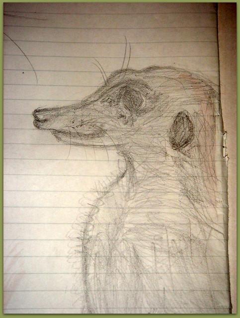 01-Meerkats and Owls Gufo, gufetto, suricato, suricati,