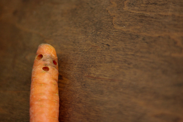 In Praise of Ugly Vegetables: Canada No 2 Carrots February Carrot