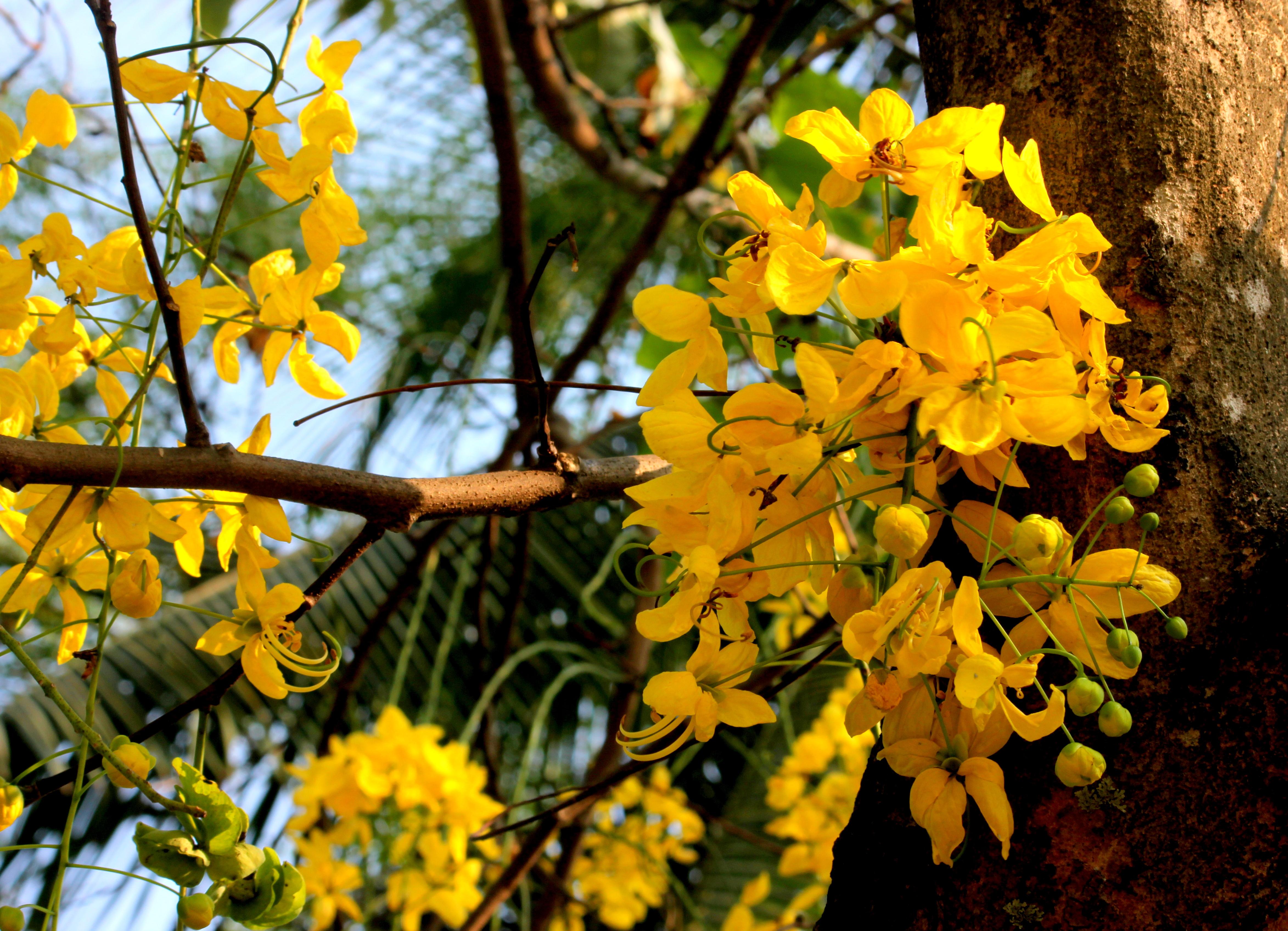 Vishu Large Images