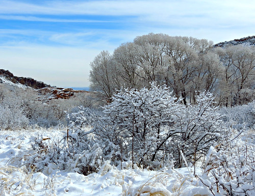 trees winter foothills snow landscape colorado snowy hiver sneeuw january paisaje invierno paysage inverno snö paesaggio snø jeffersoncounty sandraleidholdt leidholdt saljunya
