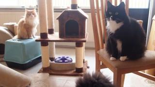 Nina en Oscar in woonkamer