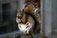 A Squirrel's Dinner