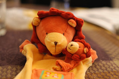Lions' Family 40/365